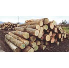 Hain Nachhaltige Holzwirtschaft